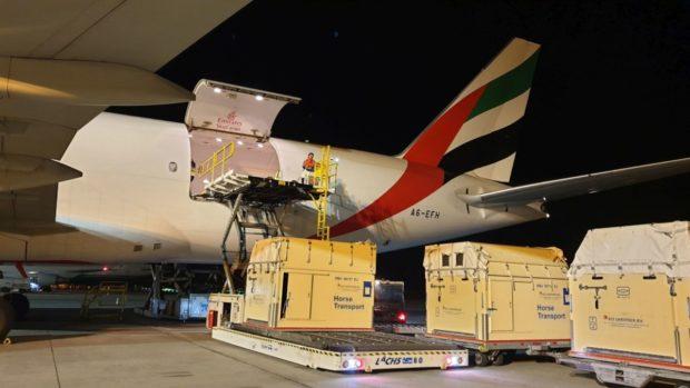 EmiratesSkyCargo přepravila závodní koně